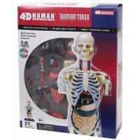 Пазл 4D Master Объемная анатомическая модель Торс человека прозр Фото